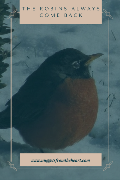 The Robins Always Come Back